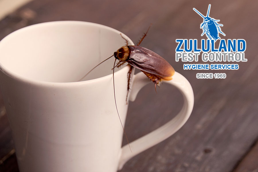 Interesting Cockroach Facts you may not know